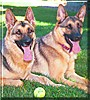 Xing & Vego the German Shepherd