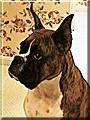Bessie the Boxer
