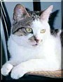 Habibi the Cat