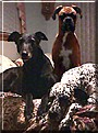 Major Kira Norris, Smacker and K.C. the Dogs