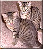 Charlie, Amelia the Cats
