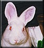 Buttercup the Florida White Rabbit