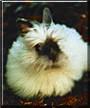Zippy the Jersey Wooly Rabbit