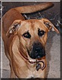 Bronson the Dog