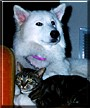 Betty Boop and Raja the Alaskan Malamute,German Shepherd/Cat