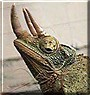 Igor the Jackson's Chameleon
