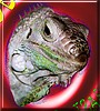 Bob the Green Iguana