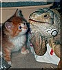 Tweety and Spikey the Cat / Green Iguana