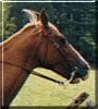 Annie the Horse