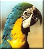 Max the Blue and Gold Macaw