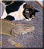 Bob, Cathy the Iguana, Calico Cat