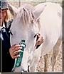 Cha Cha the Pony