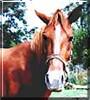 Nicodemus the Grade Horse