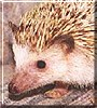 Pokey the Hedgehog