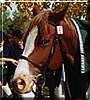 Max the Quarter Horse