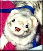 Joey the Ferret