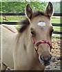 Doogan the Quarter Horse