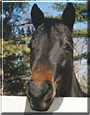 Taz the Quarter Horse