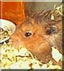 Hampy the Hamster
