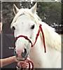 Princess the Australian Pony