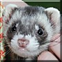 Cuno the Ferret