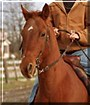 Jim Dandy the Quarter Horse, Arabian Mix