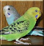 Charlie, Lucy the Parakeets