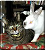 Fu, Pumpkin the Rabbit, Cat