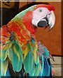 JB the Scarlet Macaw