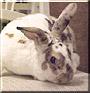 Baby the Rabbit