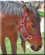Rolo the Appendix horse