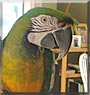 Commando the Miligold Macaw