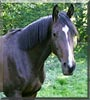 Sir Sedderick the Horse
