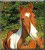 Winnie the Miniature Horse