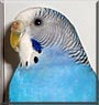 Axelle the Parakeet