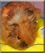 Buffy the Guinea Pig