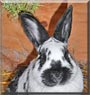 Rudi the Rabbit