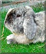 Bracken the Dwarf lop