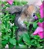 BunBun the Lop Rabbit