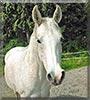Wiara the Horse