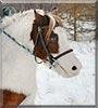 Mickey the Shetland Pony
