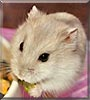 Mr. Pickle the Siberian Dwarf Hamster