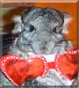 Handbag the Chinchilla