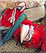 ReaRea, Miri the Greenwing Macaw