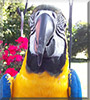 Lucy the Blue & Gold Macaw