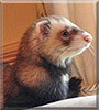 Buddy the Ferret