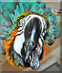 Fargo the Blue and Gold macaw