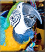 Lulu the Blue and Gold Macaw