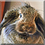 Bobina the Rabbit