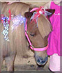 Princess the Miniature Horse